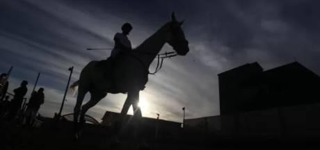 Chevaux morts et compétitions annulées: le rhinovirus continue de semer la pagaille dans le sport équestre