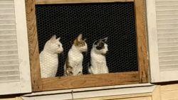Katten volgen gefascineerd spelende baasjes