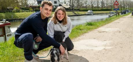 """Lotte (23) en Niels (21) gaan elke week wandelen met hun varken in Gent: """"Hij loopt braaf in de pas"""""""