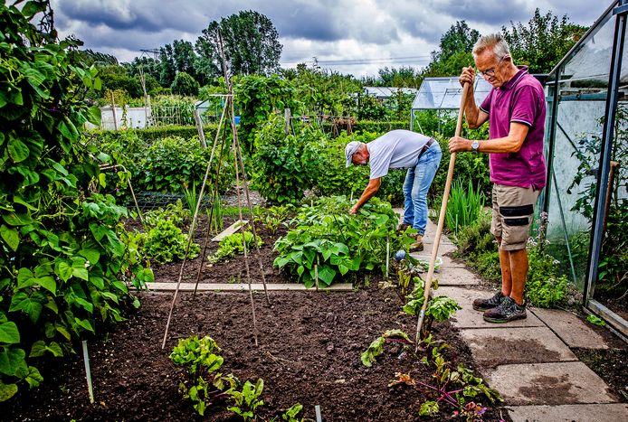 Leden van Tuinvereniging Kringloop in Dordrecht zijn aan het werk in hun moestuin.
