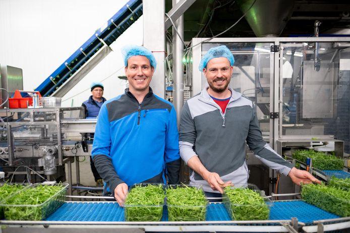 Voorstelling van de Week van de Groentestreek in het tuinbouwbedrijf Brovo van Philip en Steven Van Ostaeyen in Sint-Katelijne-Waver