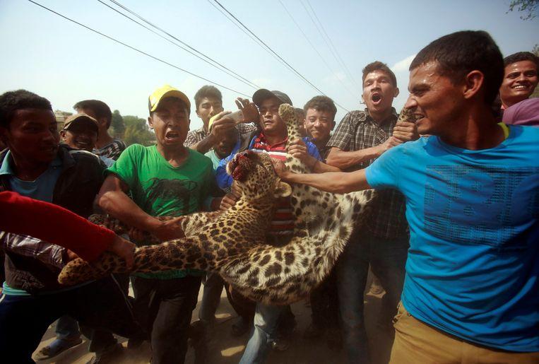 Archiefbeeld: Nepalezen dragen een gedode panter mee in Kathmandu.