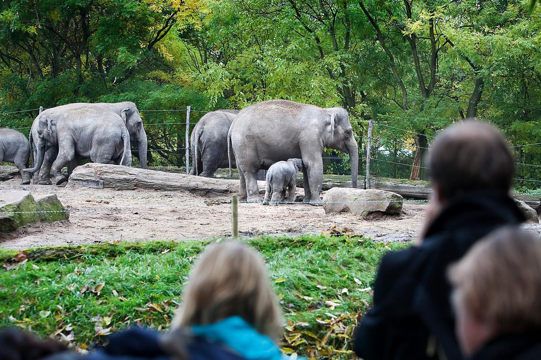 Bezoekers vinden niks leuker dan een pasgeboren olifant of giraffe.