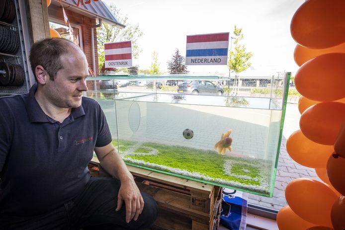 De EK-vis die in een speciaal geprepareerd aquarium zwemt van de firma Morsink (Dier & Hobby) en de uitslagen van de EK-duels van het Nederlands elftal voorspelt. Op de foto eigenaar Tim Morsink met de vis (Sluierstaart Leeuwenkop).