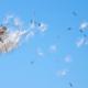 Warm weer op komst: elke dag meer kans op hooikoortsklachten
