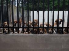 Dit zijn de vijftig honden van huntsman Frank Teunissen, en zo traint hij ze