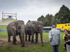 Kabinet verbiedt vanaf 2015 wilde dieren in het circus