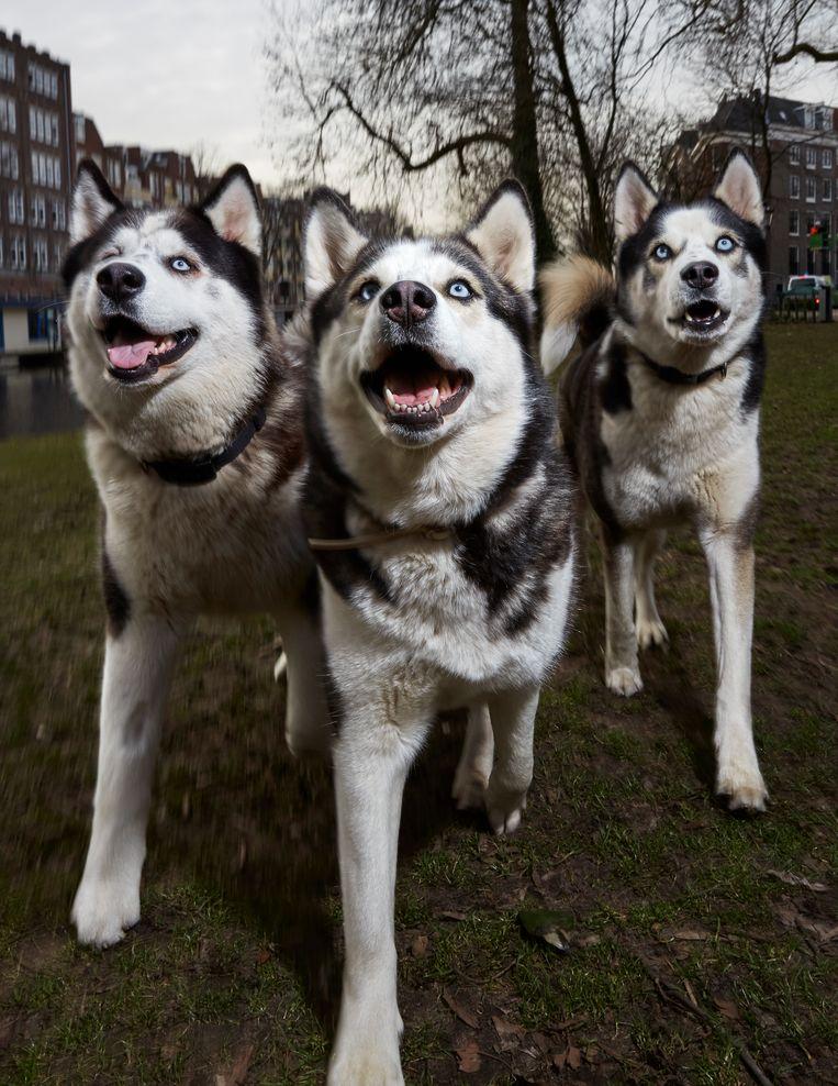Gordo, Rocco en Lola. Beeld Isabella Rozendaal