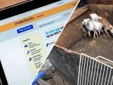Aangifte tegen marktplaats om foute puppyhandel