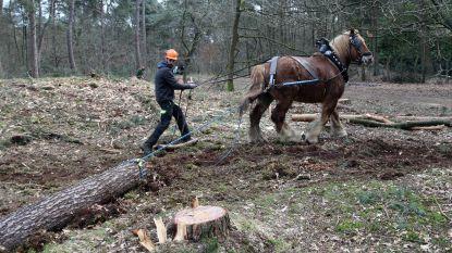 """Paarden ingezet om prehistorische grafheuvel in ere te herstellen: """"Machines zouden monument beschadigen"""""""