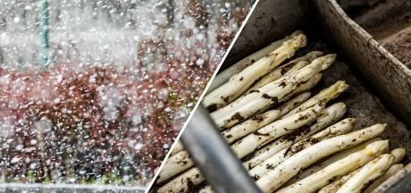 Sneeuw en vorst: dit is waarom aspergetelers geen fan zijn van het winterse weer