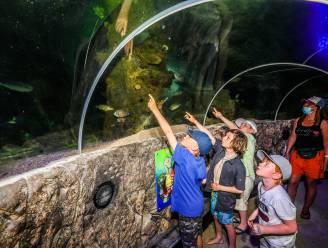 Eindelijk! Sea Life opent weer deuren voor bezoekers