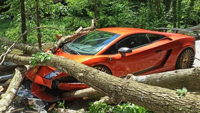 IN BEELD. Vallende boom vernielt passerende Lamborghini