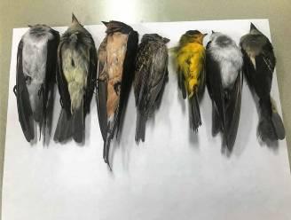 Honderdduizenden trekvogels dood aangetroffen in New Mexico. Zitten de bosbranden in Californië er voor iets tussen?