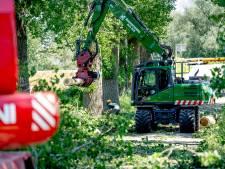Weer bomenkap in het broedseizoen in Beuningen: takken kunnen afwaaien