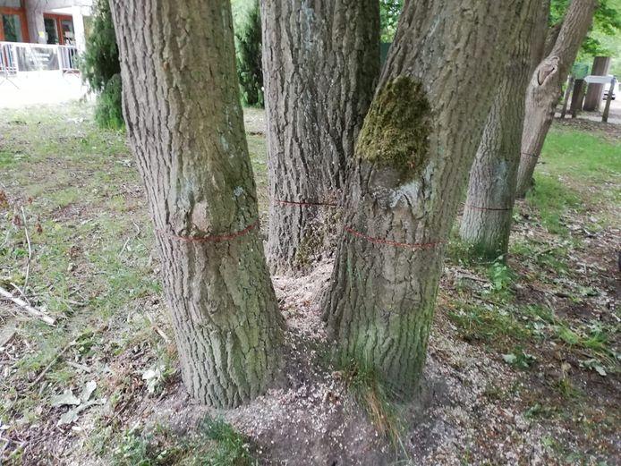 Les arbres endommagés ne survivront peut-être pas