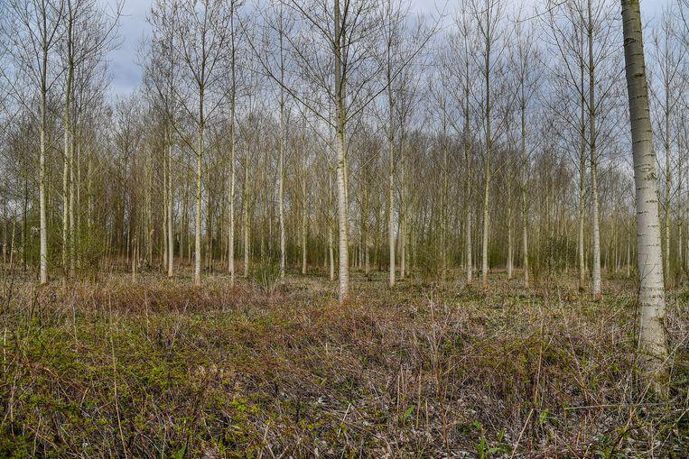Het stuk werd aangekocht in de Scheldevallei, waar Natuurpunt al heel wat bos bezit.