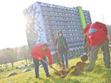 Des arbres vont être plantés en plein milieu d'une cité à Charleroi