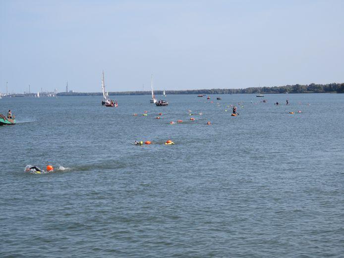 De Hollandsdiep Zwemtocht van vorig jaar. Eind jaren zestig en in de jaren zeventig waagden soms wel driehonderd zwemmers de oversteek van Numansdorp naar Willemstad. Nu gaat de tocht voor de oever langs.