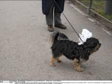 Les détectives anti-crottes de chien débarquent
