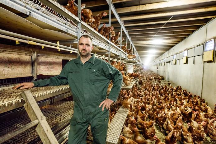 Roosendaal - 11-8-2017 - Foto: Marcel Otterspeer / Pix4Profs - Andy Siemons te midden van zijn 100.000 kippen in de stal. Hij heeft geen fipronil gebruikt, houdt alles heel strikt in de gaten.