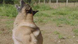 """Andy Peelman over zijn hond: """"Wilde bij de hondenbrigade gaan en dat kan niet met een chihuahua"""""""