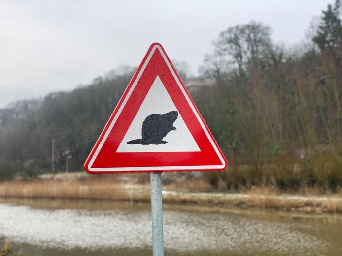 Verkeersbord bever Nijmegen Persingen Meertje
