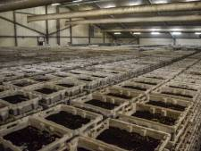 Omwonenden boos over uitbreiding wormenkwekerij: 'Op onze bezwaren wordt niet ingegaan'