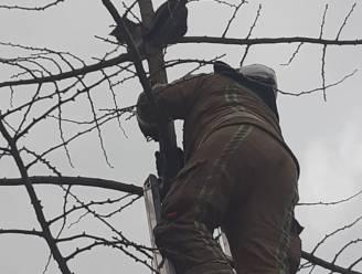 Katje kruipt in boom, maar raakt niet meer naar beneden: brandweer brengt redding