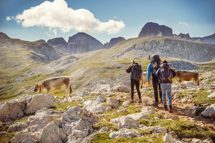 Wie in de Alpen gaat wandelen, trekt maar beter goede wandelschoenen aan.