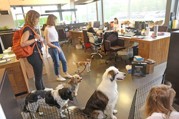 De honden van de ZEB-werknemers mochten een dagje mee naar kantoor.