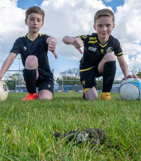 Schijtende ganzen maken van voetbaltraining een smerige boel: 'Zo'n beest poept elke vier minuten!'