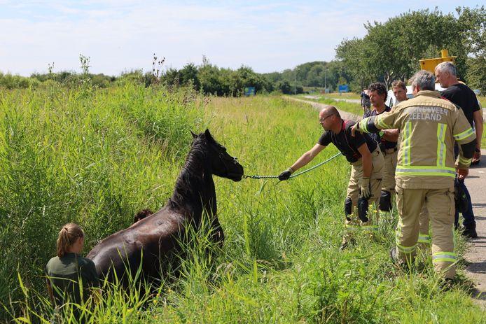 De brandweer en de berijdster wisten samen het paard uit de sloot te krijgen.