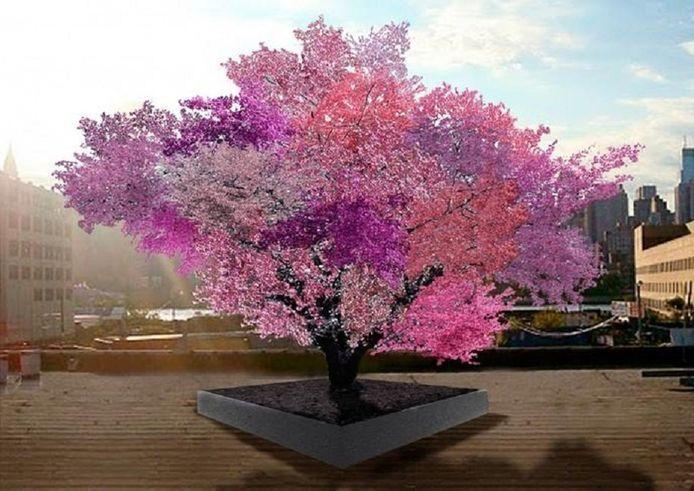 L'avantage de cet arbre hybride est qu'il ne submerge pas le jardin, vu que les fruits ne poussent pas forcément tous à la même époque. De plus, il évite le gaspillage.