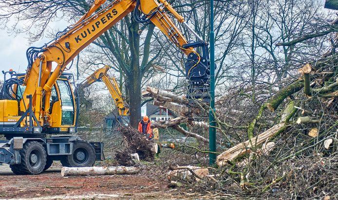 In opdracht van bouwbedrijf Heijmans ging de kettingzaag in een aantal bomen achter ROC De Leijgraaf in Oss.