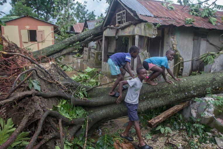 Kinderen bij een ontwortelde boom in Haïti. Beeld EPA