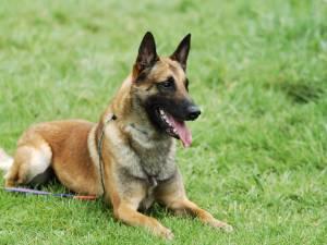 Le chien d'Angélique frôle la mort après s'être coincé dans un piège à renard