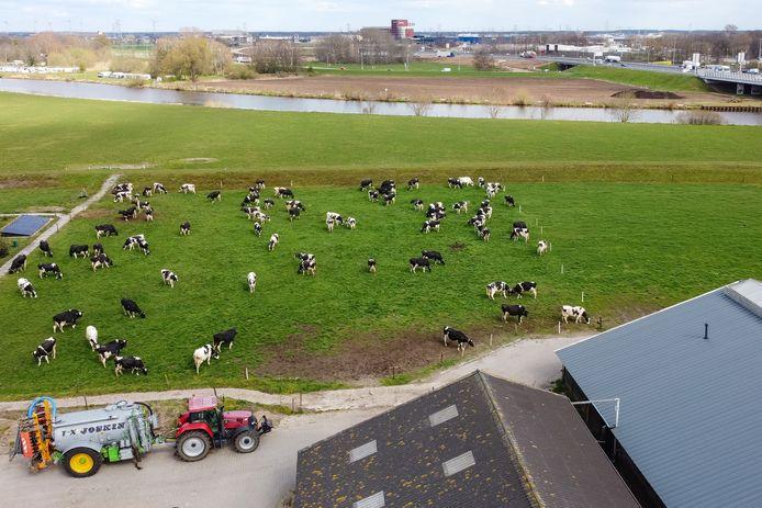 De koeien staan weer in de wei bij het boerenbedrijf van Dirk en Janny van de Streek, pal tegen Natura2000-gebied de Vecht. Op de achtergrond bedrijventerrein Hessenpoort.