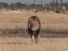 Un chasseur accusé d'avoir tué le plus célèbre lion du Zimbabwe