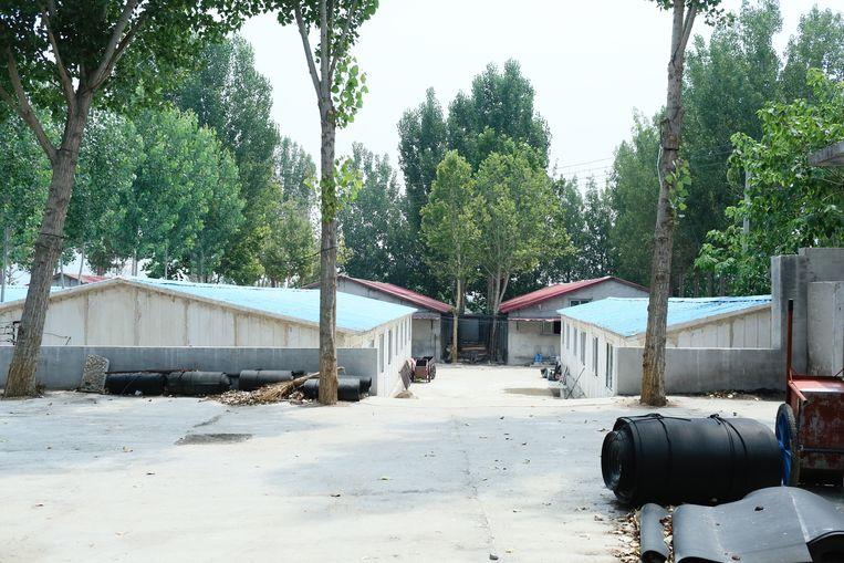 Wu had tienduizend varkens op zijn bedrijf. Nu zijn er nog een paar honderd.   Beeld Elke S.