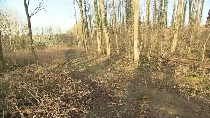 De bosweg in Sinsheim.