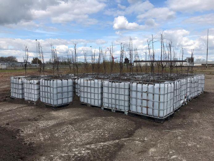Perenbomen in IBC-containers op 't Zoet in Breda