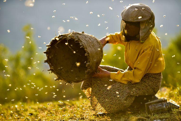 De eenzame bijenkweker Hatidze, waar 'Honeyland' op focust.  Beeld rv