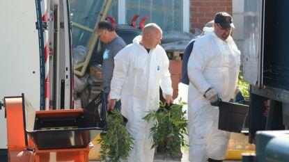 Veertiger krijgt celstraf met uitstel nadat cannabisplantage werd ontdekt in zijn loods