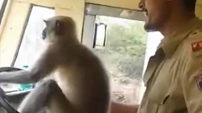 VIDEO. Indiase busmaatschappij schorst chauffeur die stuur overliet aan aap