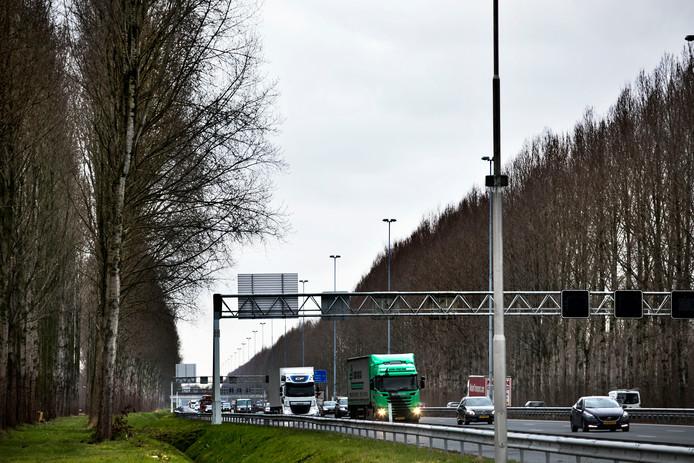 De populieren langs de A2 vormen twee majestueuze lanen.