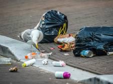 Ten aanval tegen krijsende meeuwen: Den Haag wil stevig ingrijpen en broedproces verstoren
