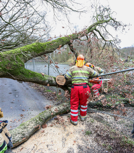 Stormachtige wind blaast boom omver bij kinderboerderij Emmeloord