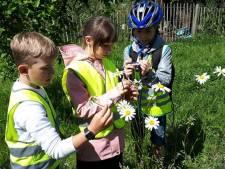 Biekes Bijzzzzondere Bijentocht: Gratis  educatieve fietstocht door Ranst