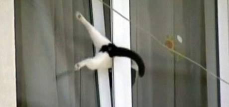 Kat sterft na gruwelijke lijdensweg in kantelraam in Emmeloord: 'Traumatisch voor eigenaren'